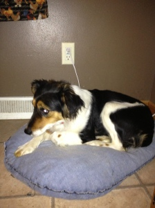Since her rescue, Miley curls up on a heated blanket rather than the cold streets of Yankton.
